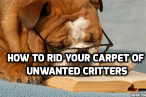 Cats, Dogs, Carpets and Fleas – How to Rid Your Carpet of Unwanted Critters