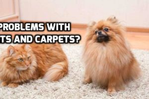 Household Pets and Carpeting – Helping them 'Get Along'